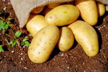 Patates Yapısı ve Depolama Sistemi